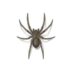 Wolf spider control and prevention in Des Moines and Cedar Rapids Iowa - Springer Professional Home Services.
