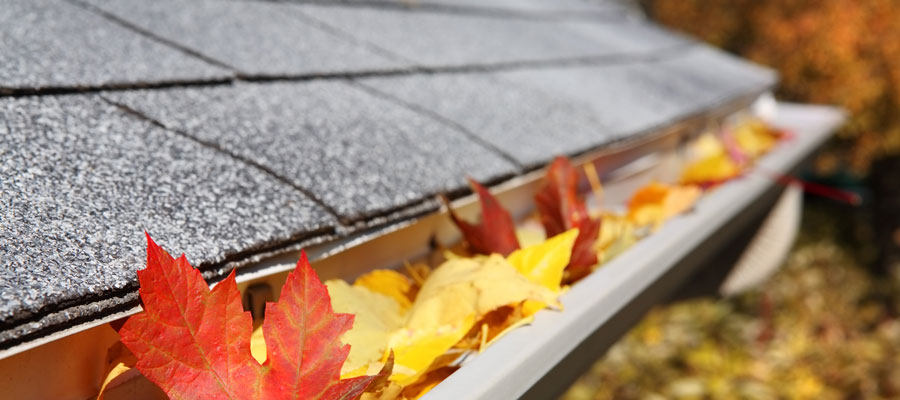 Pest-proofing tips for fall in Des Moines IA - Springer Professional Home Services